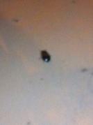 Splat goes the stink bug!