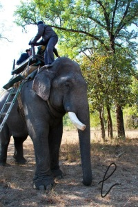 Thanks to my fear of heights, I struggled to get up this lovely elephant whilst in India January 2011. Just had to put this out there so you guys can understand how proud I am of getting up CV12.